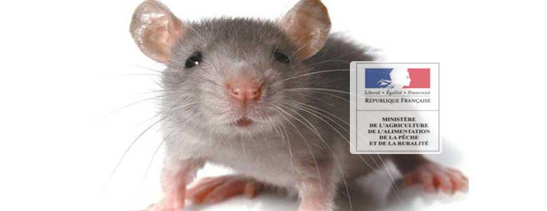 Comment fabriquer son piège à rats ?